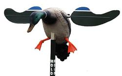 Mojo Hunt Wise HW4401 Baby DRAKe 6V Decoy